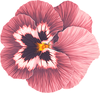 C-093 Pansy Flower