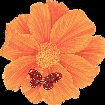 C-105/1 Butterfly